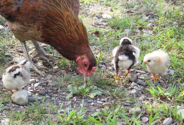 About The Farm - Morehouse Farm